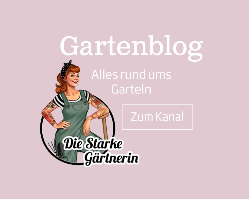 Im Starkl Gartenblog informiert Sie die starke Gärtnerin über aktuelle Tipps und Tricks rund um das Thema Haus und Garten.