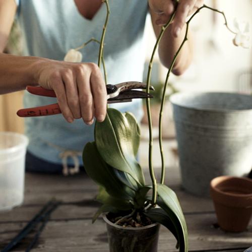 Angebote/Angebote_Tippbilder/Orchideen.jpg
