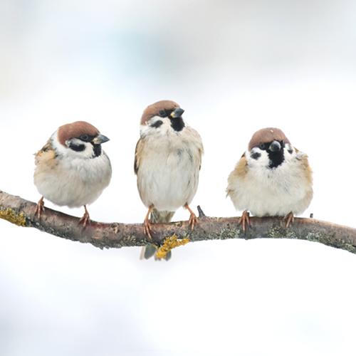 Angebote/Angebote_Tippbilder/Vogelfutter.jpg