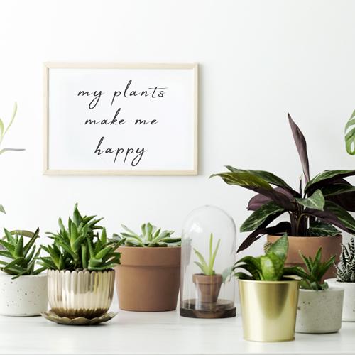 Angebote/Angebote_Tippbilder/Zimmerpflanzen.jpg