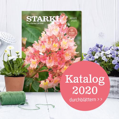 Im Starkl Pflanzen Katalog finden Sie den Großteil des Pflanzen Sortiments aus allen Starkl Gartencentern