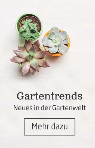 In den Starkl Gartentrends zeigen wir Ihnen die schönsten Pflanzen und Ideen rund um Haus und Garten