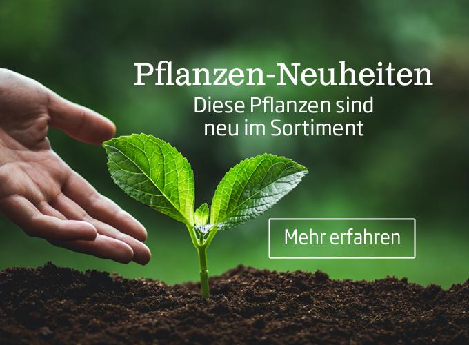 In den Starkl Pflanzenneuheiten finden Sie neue Pflanzen, exotische Pflanzen und neue Pflanzensorten