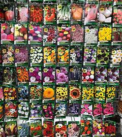 Gartencenter/Angebote/AB/2019/01Samen_Austrosaat.jpg