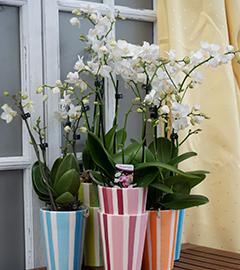 Gartencenter/Angebote/AB/2019/Orchideen.jpg