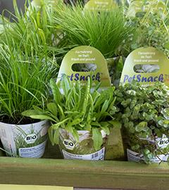 Gartencenter/Angebote/AB/Newsletter/2019/Heimtierfutterpflanzen.jpg