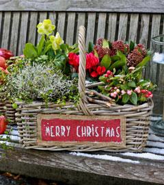 Gartencenter/Angebote/Wien/Weihnacht_arrangement.jpg