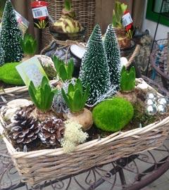 Gartencenter/Angebote/Wien/Weihnacht_dekoschalen.jpg