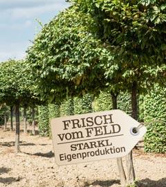 Gartencenter/Angebote/Wien/baeume_fvf.jpg