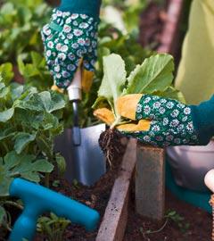 Gartencenter/Angebote/Wien/gemuesepflanzen.jpg
