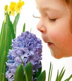 Gartencenter/Angebote/Wien/hyacinthe.jpg
