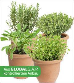 Gartencenter/Angebote/Wien/kraeuter_mediteran_GAP.jpg