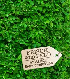 Gartencenter/Angebote/Wien/ulmus_fvf.jpg